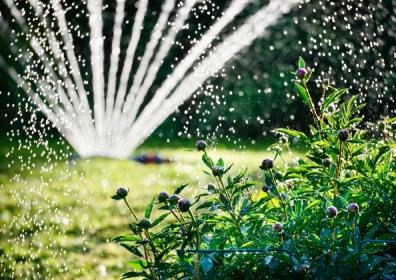 Garden sprinkler © shutterstock / connel